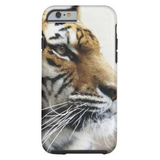 Tiger. Asahiyama Zoo, Hokkaido, Japan Tough iPhone 6 Case