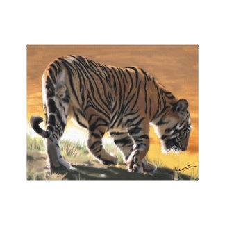 Tiger at Bandhavgarh Canvas