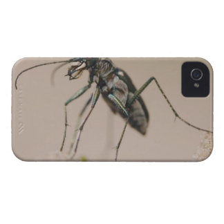 Tiger Beetle, Cicindela ocellata, adult on sand, iPhone 4 Cover