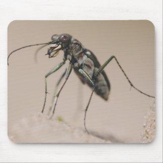 Tiger Beetle, Cicindela ocellata, adult on sand, Mouse Pad