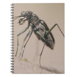 Tiger Beetle, Cicindela ocellata, adult on sand, Notebook