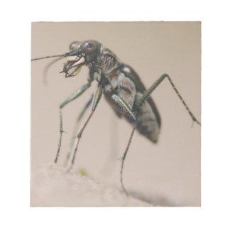 Tiger Beetle, Cicindela ocellata, adult on sand, Notepad