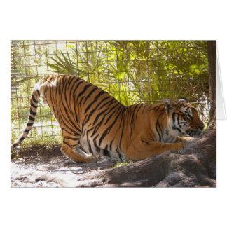 Tiger Bengali 002 Greeting Card
