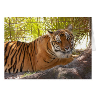 Tiger Bengali 004 Greeting Card