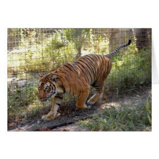 Tiger Bengali 006 Greeting Card