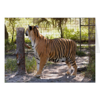 Tiger Bengali 007 Greeting Card