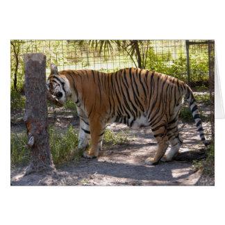 Tiger Bengali 008 Greeting Card