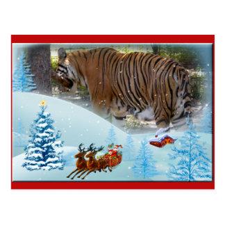 Tiger Bengali-c-10 copy Postcard