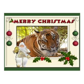 Tiger Bengali-c-141 copy Postcard