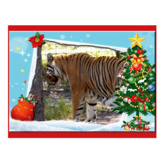 Tiger Bengali-c-2 copy Postcard