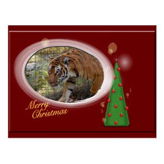 Tiger Bengali Christmas Postcard