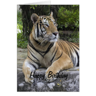 Tiger Blank Birthday  Card
