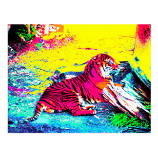 Tiger Bright Postcard