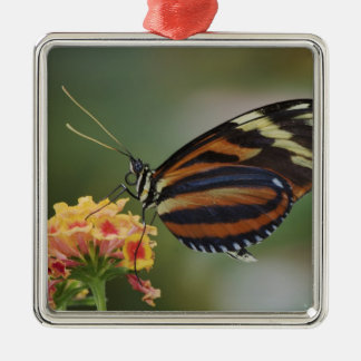 Tiger butterfly, Heliconius ismenius Christmas Ornament