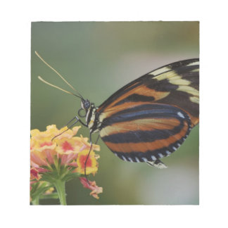 Tiger butterfly, Heliconius ismenius Notepad