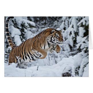 Tiger Cards