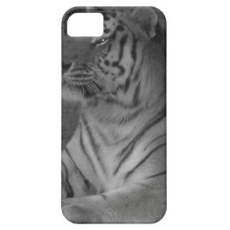 Tiger iPhone 5 Cases