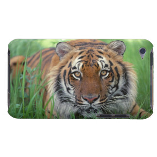 Tiger iPod Case-Mate Cases