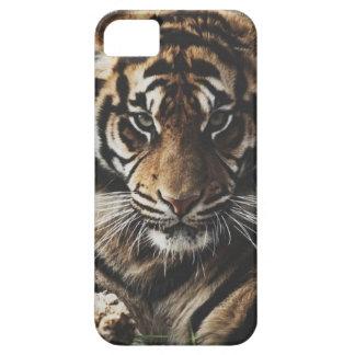 Tiger Case