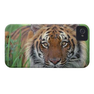 Tiger iPhone 4 Case-Mate Cases