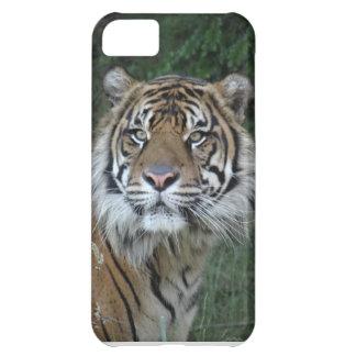 Tiger iPhone 5C Case