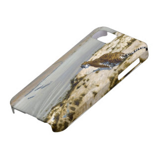 Tiger iPhone 5/5S Covers