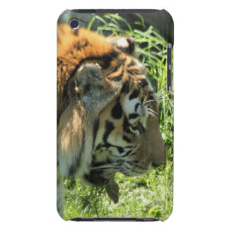 Tiger iPod Touch Cases