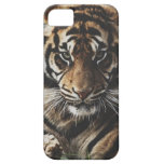 Tiger Case Barely There iPhone 5 Case