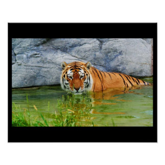 Tiger Cat Animal Christmas Contemporary Modern Print