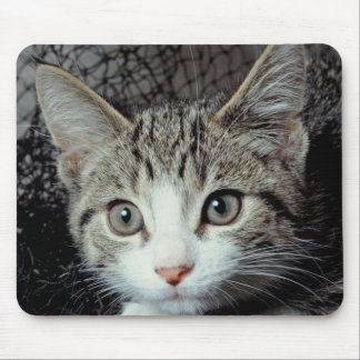 Tiger Cat Mouse Mat