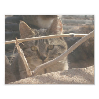 Tiger Cat Peering through Twigs Photo