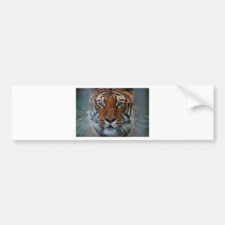 Tiger Cat Stripes Jungle Mist Animal Bumper Sticker