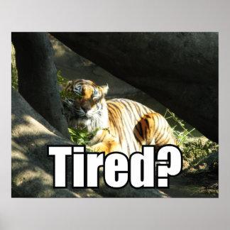 Tiger Catnap Poster