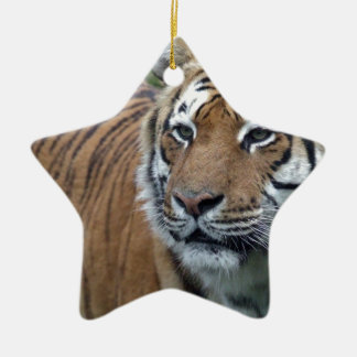 Tiger Ceramic Star Decoration