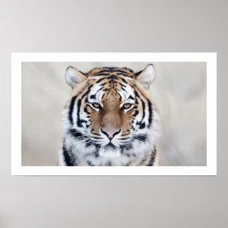 Tiger close-up Art Print Poster