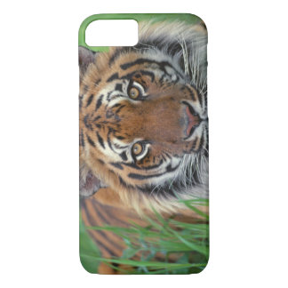 Tiger Close-Up of head iPhone 8/7 Case