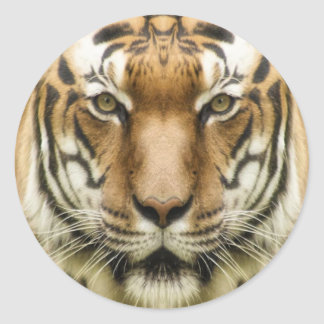 Tiger Close-Up stickers