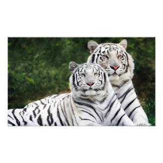 tiger couple art photo