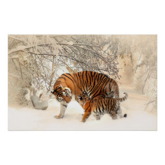 tiger cub and mother in snow poster
