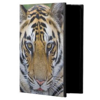 Tiger cub, Bandhavgarh National Park, India iPad Air Case