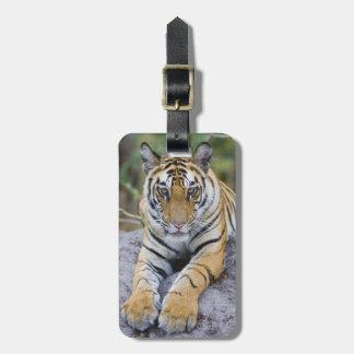 Tiger cub, Bandhavgarh National Park, India Luggage Tag