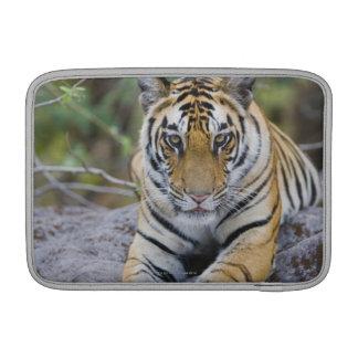 Tiger cub, Bandhavgarh National Park, India MacBook Sleeve