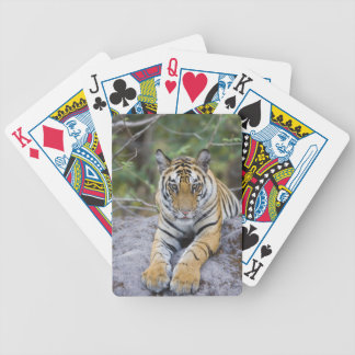 Tiger cub, Bandhavgarh National Park, India Poker Deck