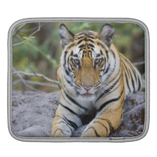 Tiger cub, Bandhavgarh National Park, India Sleeves For iPads