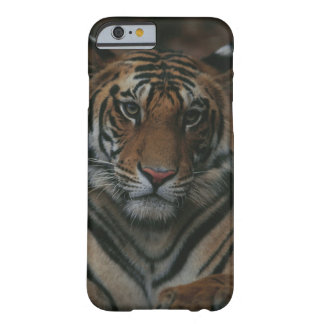 Tiger Cub Barely There iPhone 6 Case