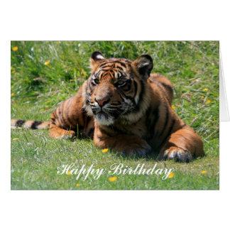 tiger cub happy birthday greeting card