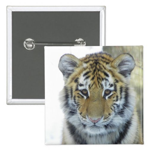 Tiger Cub In Snow Close Up Portrait Pinback Buttons