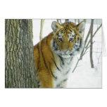 Tiger Cub In Snow Peeking Around Tree Greeting Card