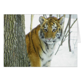 Tiger Cub In Snow Peeking Around Tree Greeting Card