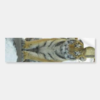Tiger Cub In Snow Portrait Bumper Sticker